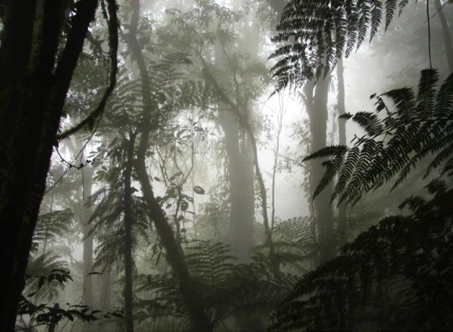 bosque-nublado