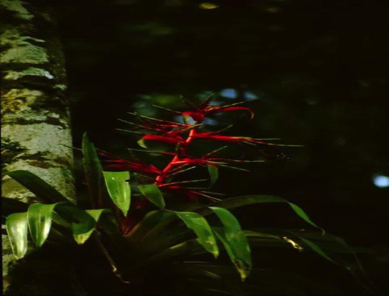 La montaña presenta una vegetación variada y exótica.
